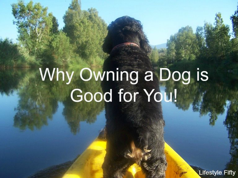 why owning a dog can be good for you