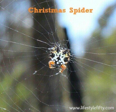 christmas tree, christmas spider