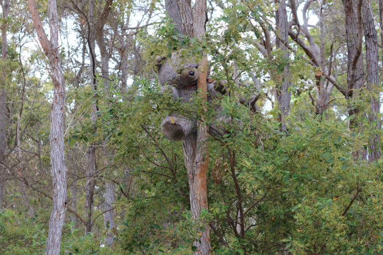 Reasons why camping is good for you. Pic of teddy bear in tree.