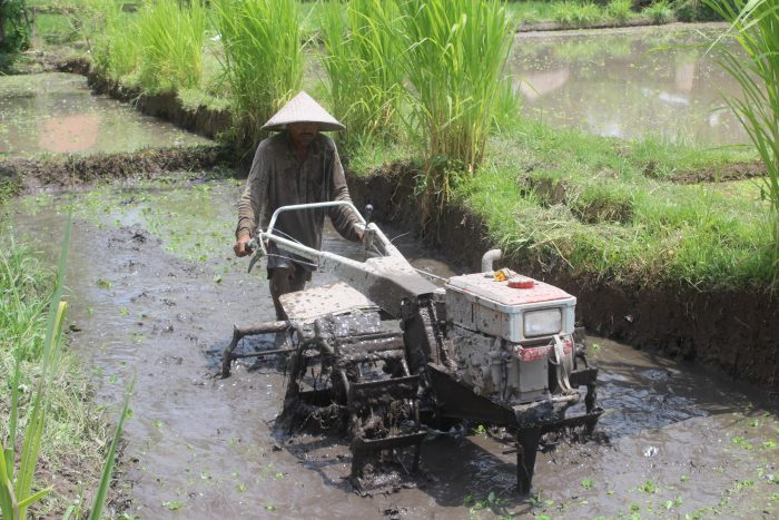 Why travel? Reasons to get packing your suitcase. Photo of man ploughing a rice field in Bali.