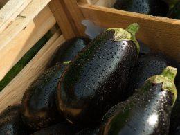 eggplant salad, warm chorizo and aubergine salad