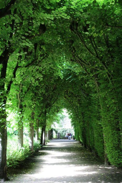 Green avenue of trees