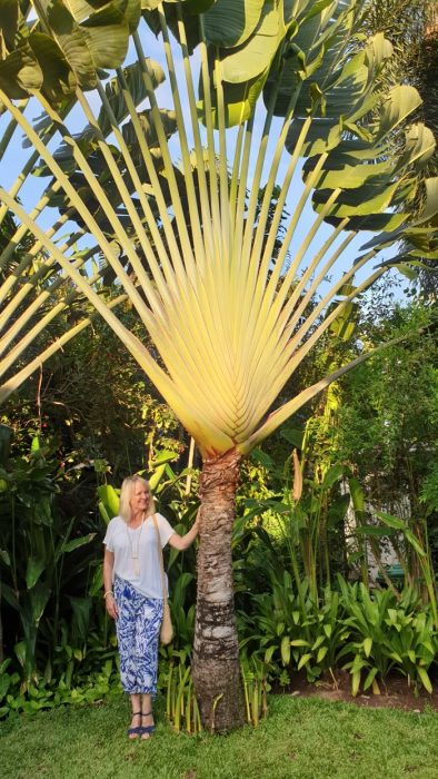 Woman by palm tree - what to pack for a tropical holiday in Bali