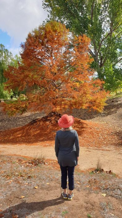 Fall trees, from the post fall fashion ideas